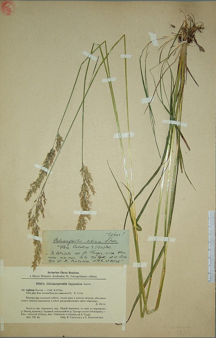 http://www.mobot.org/MOBOT/Research/LEguide/specimen-images/101/img_med/sukaczew-r24.jpg