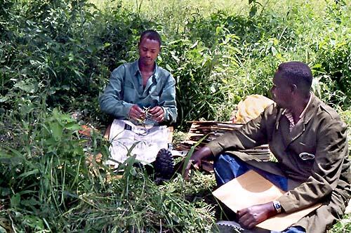 Research paper on tanzania