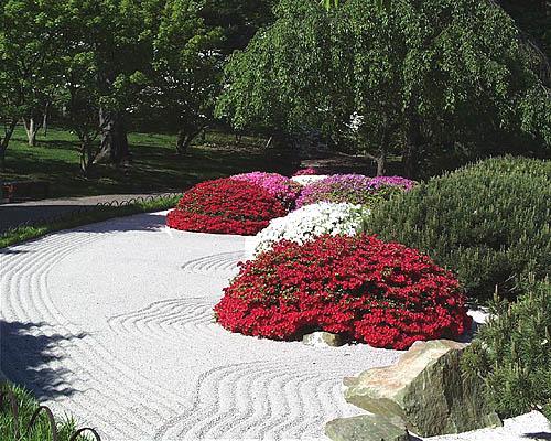 Plants in the garden this week - Jardin zen plantes ...