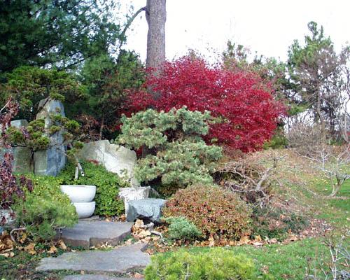 Plants In The Garden This Week