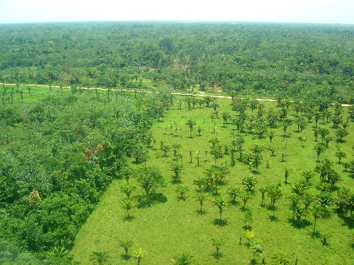 essays about rainforest amazon rainforest in brazil location the amazon rainforest is located in south america, south of the equator it covers 21 million square miles of land.
