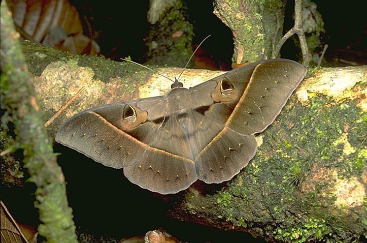 Large moth by stream