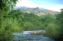 Mananara River gallery forest