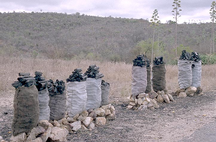 how to get charcoal in madagascar
