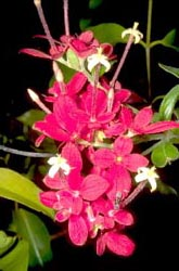 Bright red flowers from Ampijoroa
