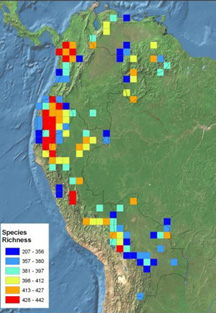 Determinants of vascular plant species richness in the Tropical Andes
