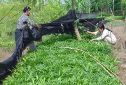 Community conservation of an endangered rattan species in the buffer zone of Bach Ma National Park, central Vietnam