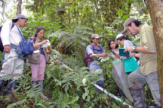 Undergraduates from Peruvian universities collecting plant specimens during an MBG internship program based in Peru's Selva Central