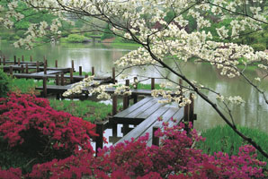 http://www.mobot.org/press/Media_Room_Images/Garden_Spring/viewable/JapaneseGarden_JJennings.jpg