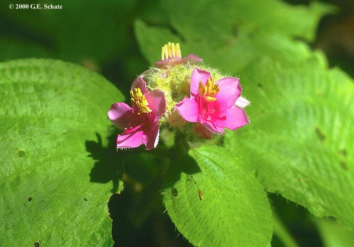 Botanical publications