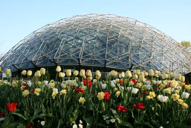 Climatron with tulips and daffodils