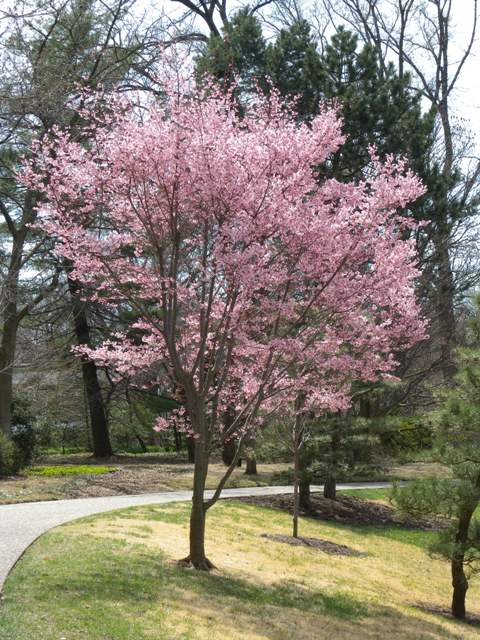 Event details page small trees for your yard new for Small trees for small yards