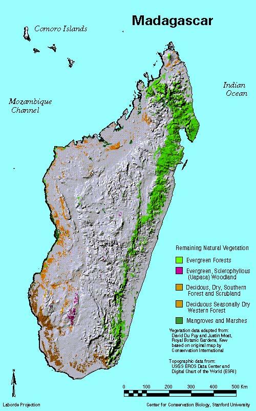 Madagascar Vegetation Map MBG: Madagascar Biodiversity and Conservation   Madagascar